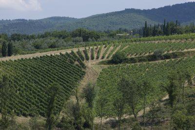 Wine Tasting - The Wines of Mazzei