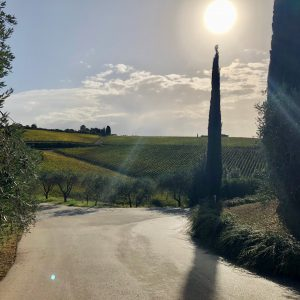Wine Tasting Series: Italian Oddities